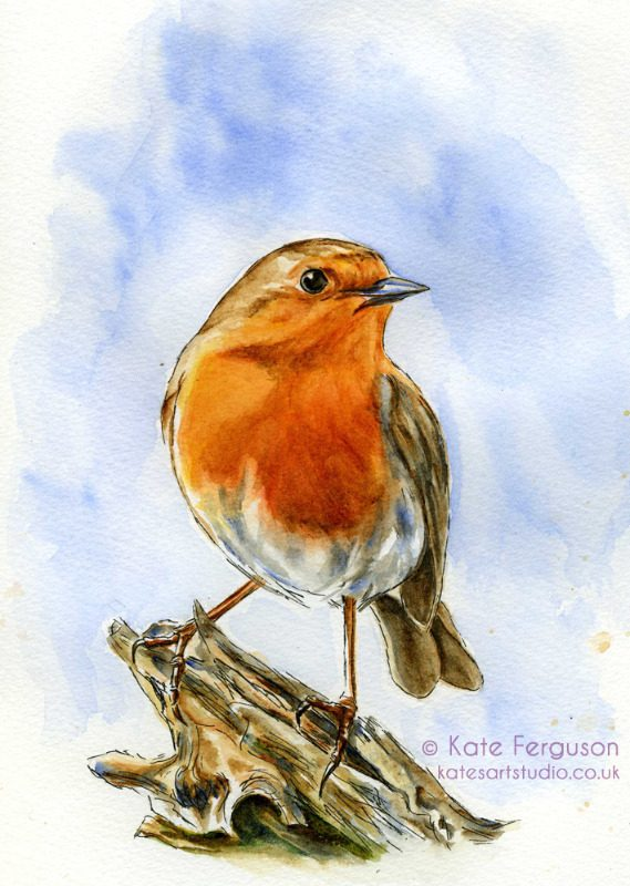 Robin - ink and watercolour