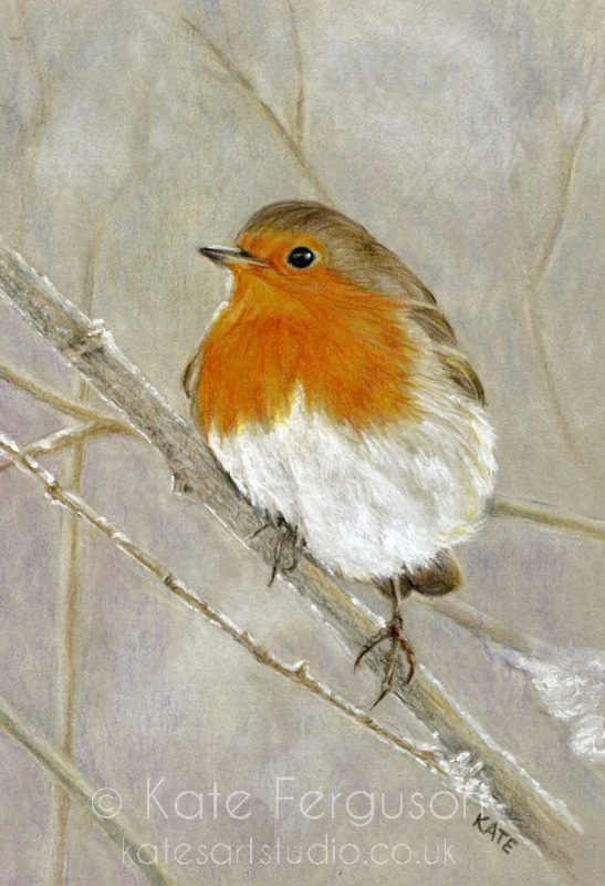 Robin in coloured pencil