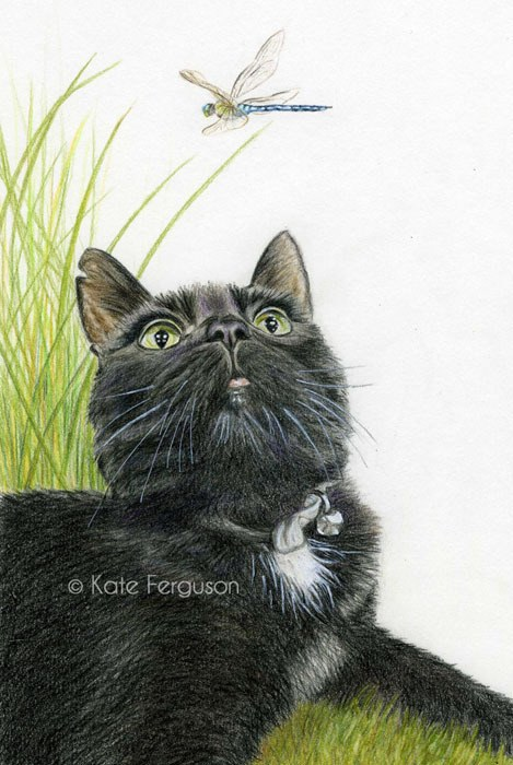 Coloured pencil commission - Tabitha