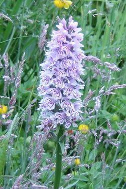 DSCF4638-1 orchid