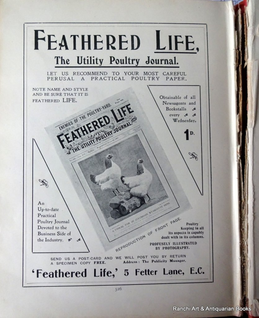 Encyclopaedia of Poultry, edited JT Brown, FZS, Vol II, 1909. Detail.