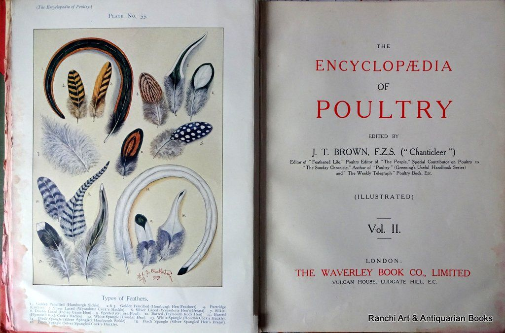 Brown, J.T. (Editor), Chanticleer, Encyclopaedia of Poultry, Vol. II., Published The Waverley Book Co. Ltd., London, 1909.