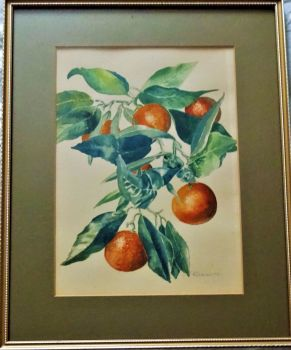 Still-life study of Nectarines, watercolour on paper, signed P. Jeannotte, c1975. Framed.