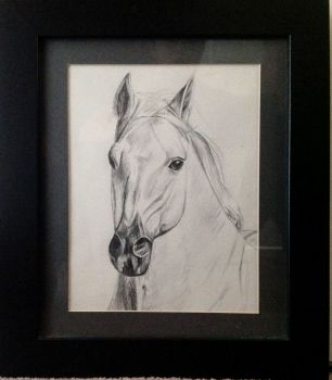 Drawing of a Horse, pencil on paper, signed and dated Christine 2012. (Christine Pallett). Framed.
