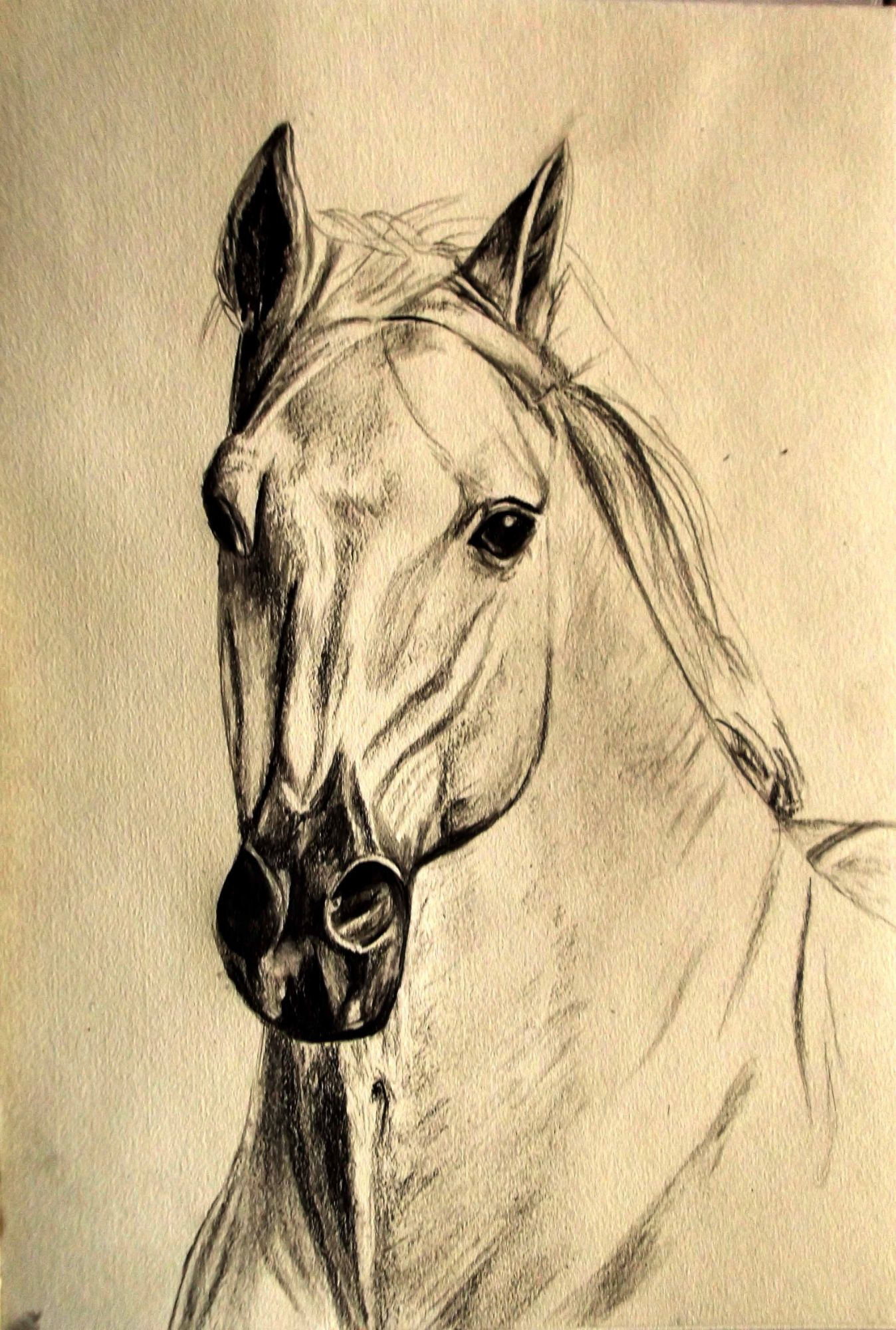 Christine Pallett, Drawing of a Horse.