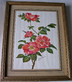 Wild rose, modern print, signed John Evans, framed and glazed c1980.
