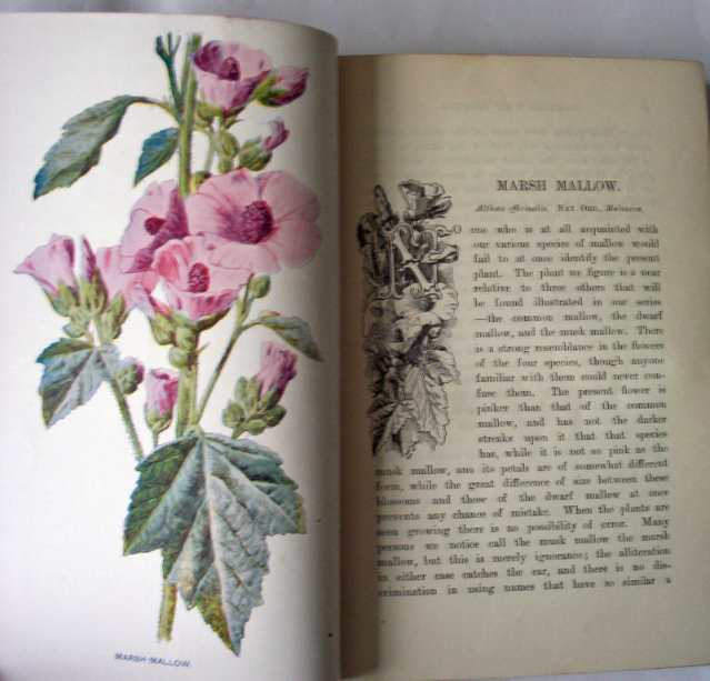 Familiar Wild Flowers by F. Edward Hulme MCMII Cassell and Co