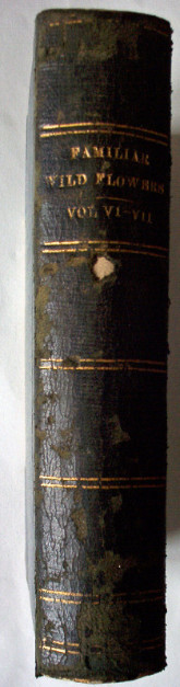 Familiar Wild Flowers Vol VI-VII (Combined edition Vol III) Showing spine and gilt title.