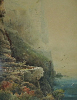 Puffins at Bempton Cliffs, signed Frederick William Booty, 1917.    SOLD.