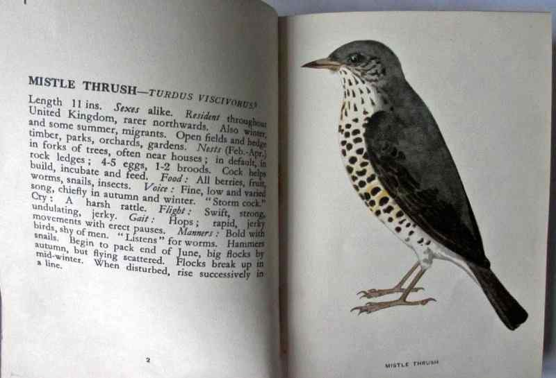 Sample page, Mistle Thrush with description and colour illustration.