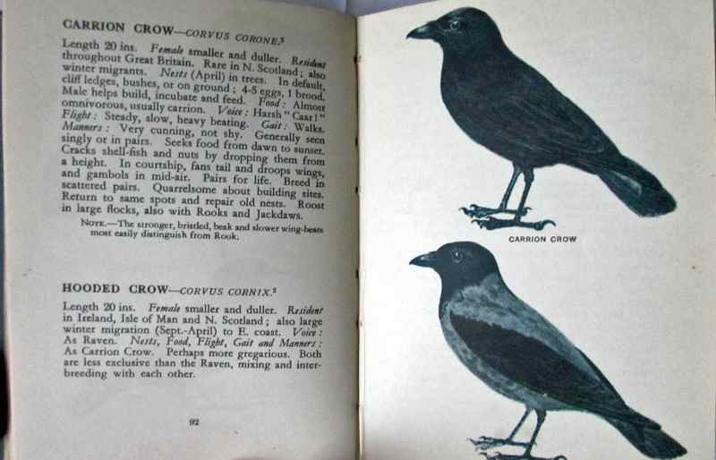 Sample page p92, Carrion Crow with description and facing colour illustration.