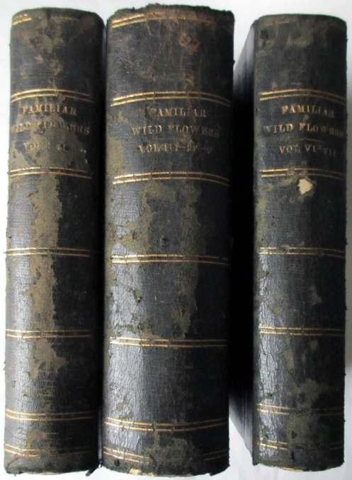 Familiar Wild Flowers by F. Edward Hulme, Cassell & Co. Ltd., London. 1902. Vols 1-7.