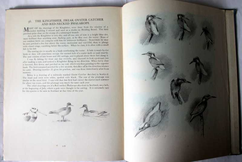 Bird Portraits by J.C. Harrison. First Edition 1949. Sample sketches.