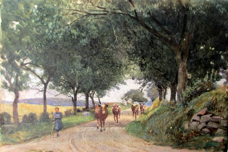 Lady cowherd taking cattle to field, watercolour, unsigned. c1950.