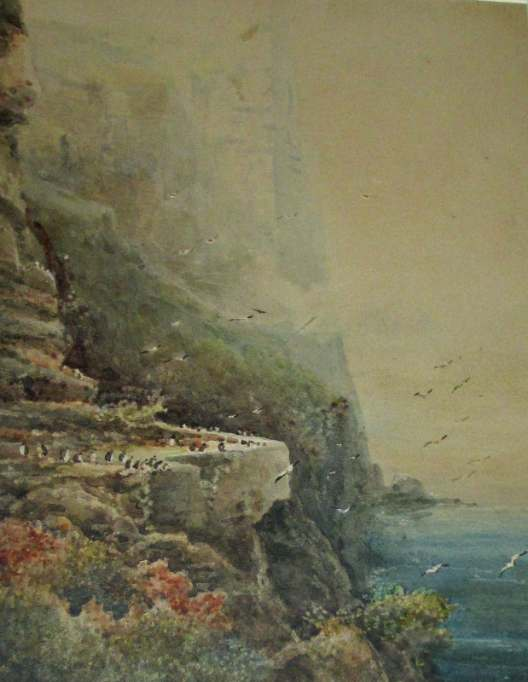 Puffins at Bempton Cliffs, signed Frederick William Booty, 1917.