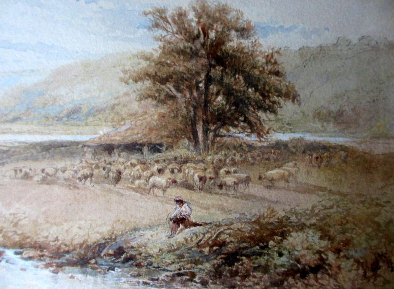 Detail of tree and sheep.