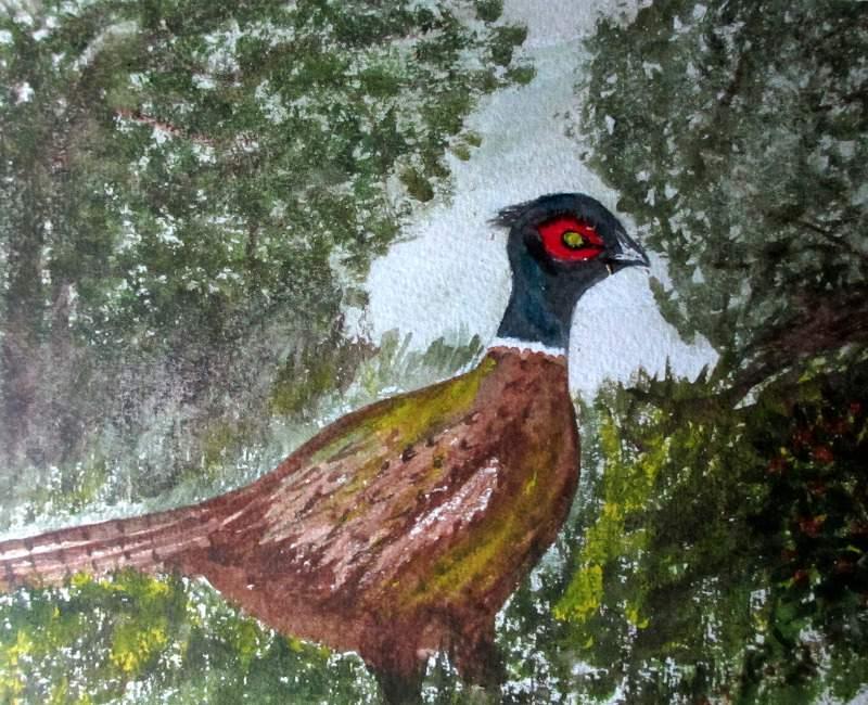 The Pheasant, c1980.
