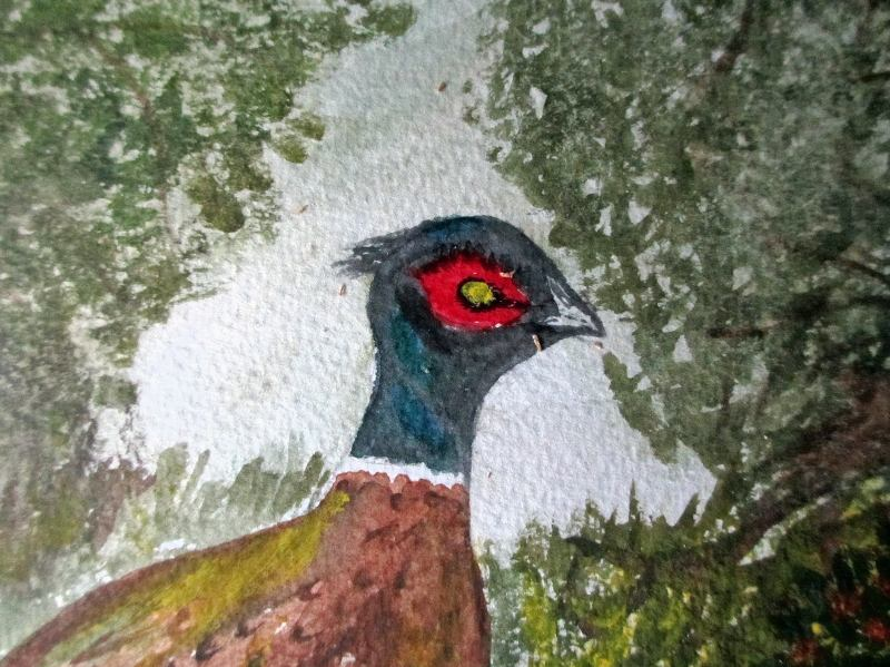The Pheasant, watercolour, unsigned. c1980.