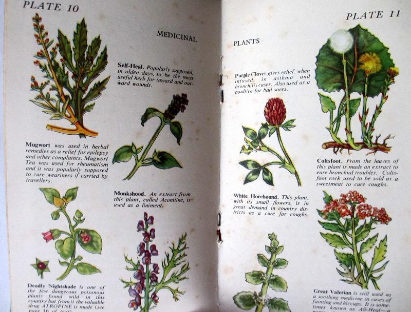 Wild Flowers. Centrefold.