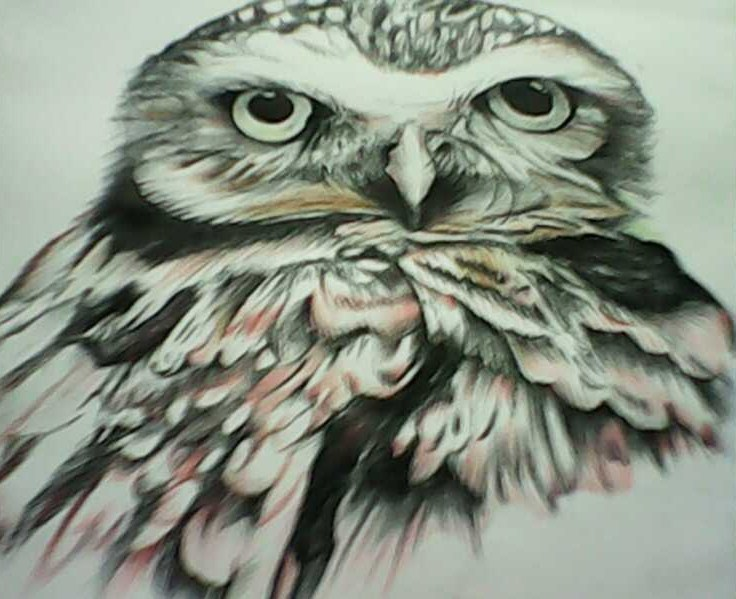 Study of an Owl, charcoal, graphite and coloured pencil drawing. Signed.