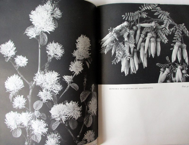 Trees and Shrubs by Blanche Henrey, 1944. 1st Edition.