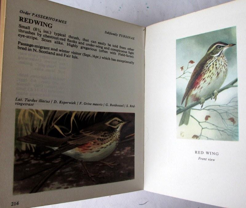 Bird Spotting by John Holland, 1965. Detail.