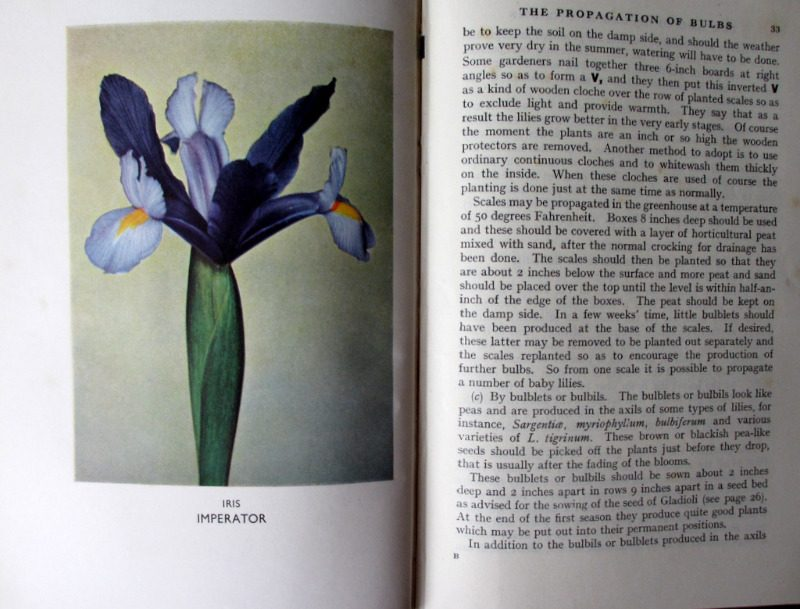 The A.B.C. of Bulbs and Corms by W.E. Shewell-Cooper, H & S, 1948. 1st Edition. Details.