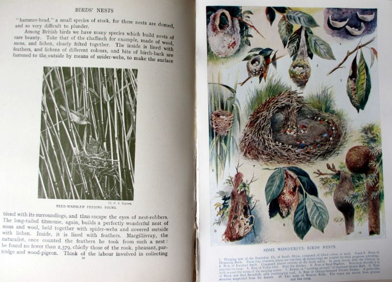 The Wonder Book of Nature for Boys and Girls, Edited by Harry Golding, 7th Edition. c1927. Details.
