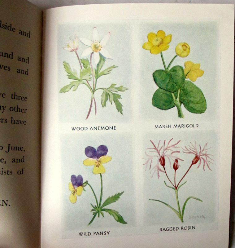 The Puzzle Book of Wild Flowers Patricia Baines, illustrated by B. Butler, 1963. Detail.