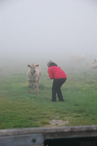 cow whisperer 1