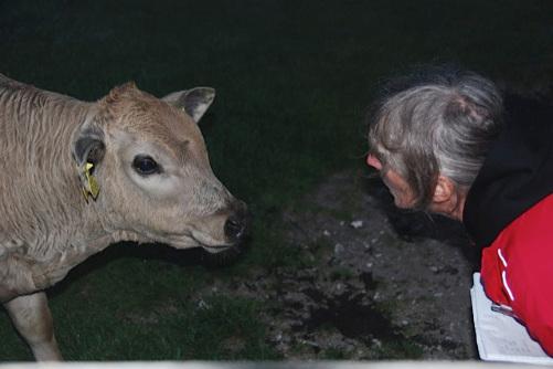 cow whisperer 2