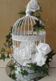 bird cage ivy