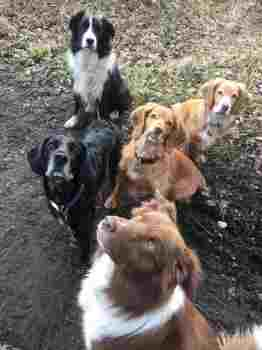 Dog Walking in Guildford and Godalming