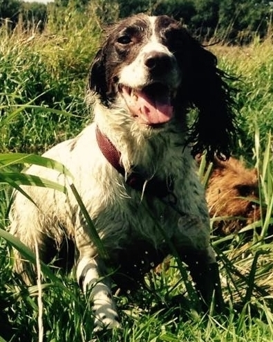 Dog Walking in Surrey, West Sussex and Hampshire