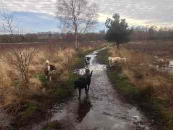 ForPaws Group Dog Walking in Guildford and Godalming