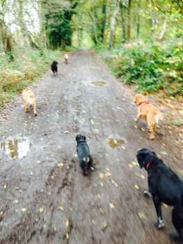 ForPaws Group Walks