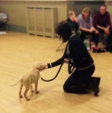 Puppy & Adult Dog Training Classes