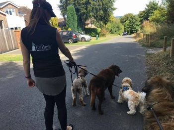 ForPaws Dog Walks in Guildford and Godalming