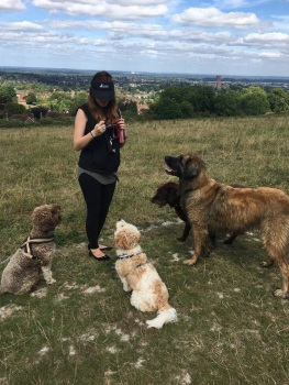 ForPaws Force-Free Ethical Dog Walks