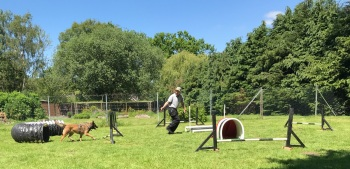 Fun Agility Classes Liphook