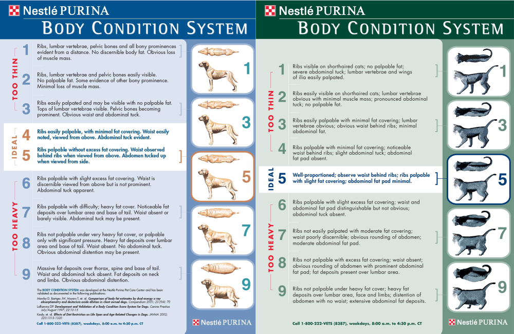 Body Condition Score Dog and Cat