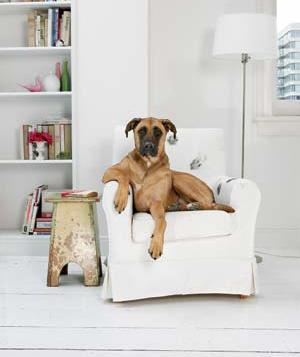 sofa-dog_300