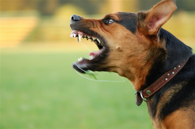 Is aggression a sign of a dominant dog?