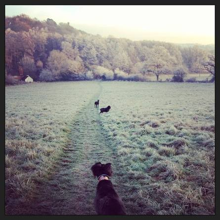 Ethical Dog Walking in Surrey, West Sussex and Hampshire