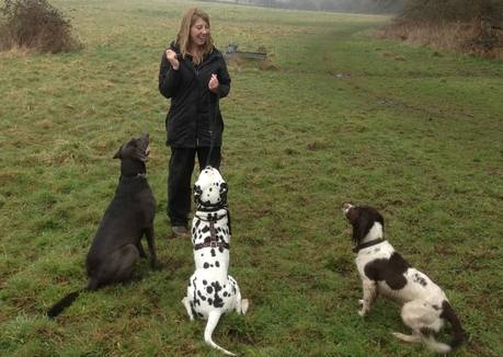 ForPaws Dog Walking and Pet Sitting in Surrey, West Sussex and Hampshire