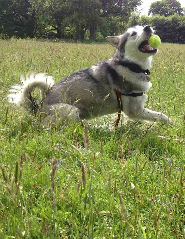 Dog & Puppy Training and Walking in Guildford and Godalming, Surrey
