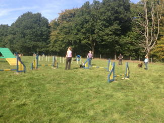 Agility Classes in Godalming, Surrey
