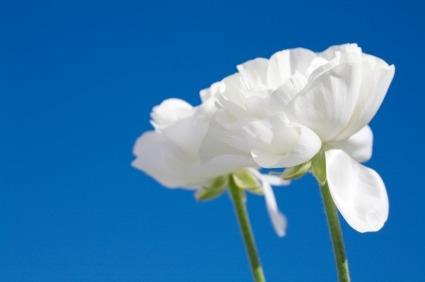 white_flower_blue_skyxsmall