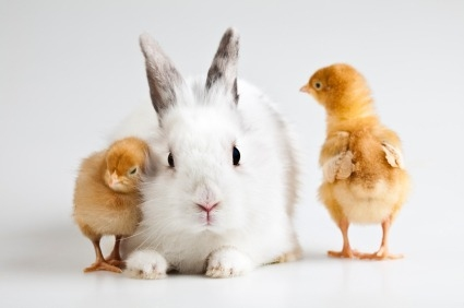 bunny_and_chicks_xsmall