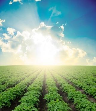 crops_in_field_xsmall